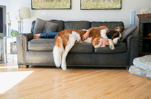 9 Reasons to Leave Work Right Now, Go Home and Take a Nap