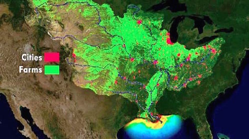 The Gulf Of Mexico Will Experience One Of Its Largest Dead Zones Ever