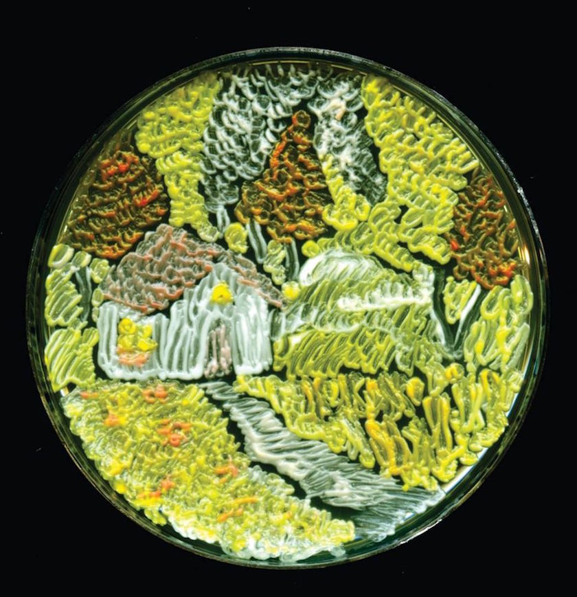"A Microbiologist ""Painted"" Van Gogh's 'Starry Night' With Bacteria in Petri Dishes"
