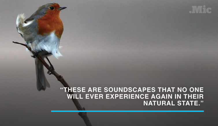 A Scientist Recorded the Bone-Chilling Sound of All the World's Creatures Going Extinct