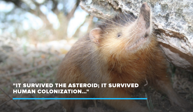 A Small, Venomous Mammal Outlived the Asteroid That Killed the Dinosaurs