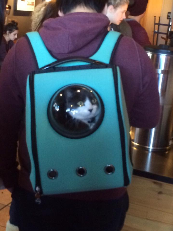 Adorable Cat Backpack Will Ruin Your Cat's Life While Immediately Improving Your Own
