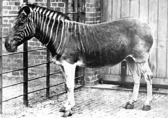 5 Extinct Animals Science Could Bring Back to Life