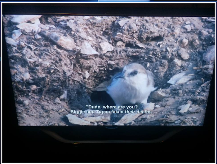 Netflix Accidentally Put Aziz Ansari Subtitles on a Nature Doc and the Results Are Amazing