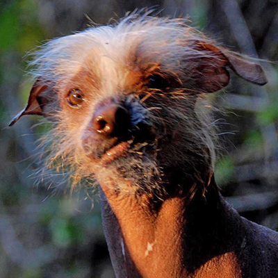 World's Ugliest Dog Competition 2016: Photos You Have to See to Believe